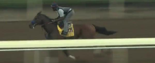 Candy Boy Breeders Cup Classic Odds