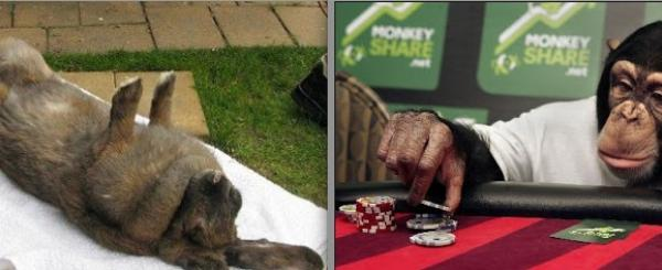 Government Waste: Taxpayers Paid for Gambling Monkeys, Rabbit Massages
