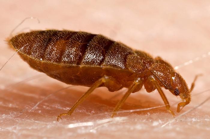 Biggest Fear During Vegas Strike Bed Bugs Infestation