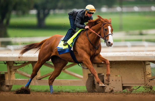 Justify Payout Odds - 2018 Preakness Stakes