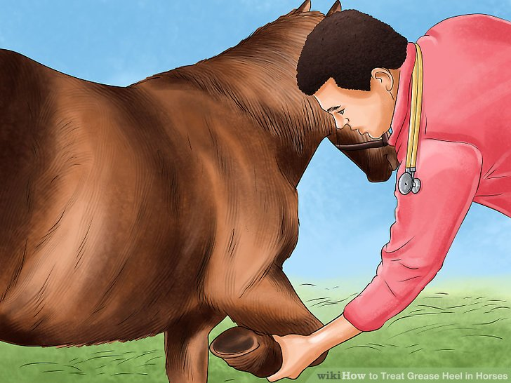 Justify Heel Healed Ahead of Preakness Stakes?