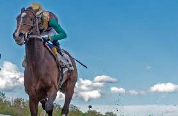Alwaysmining Preakness Stakes Payout Odds