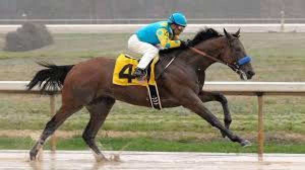 Im betting on american pharaoh gasquet vs karlovic betting expert sports