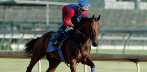 American Pharoah Best Odds to Win Belmont Stakes, Current Line