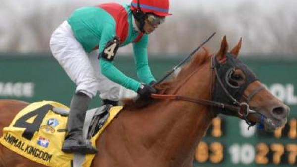 Animal Kingdom Kentucky Derby Odds