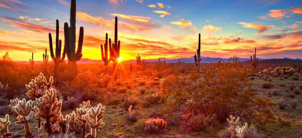 BetMGM Expands Into Arizona, Partnering With Gila River Hotels & Casinos, Arizona Cardinals