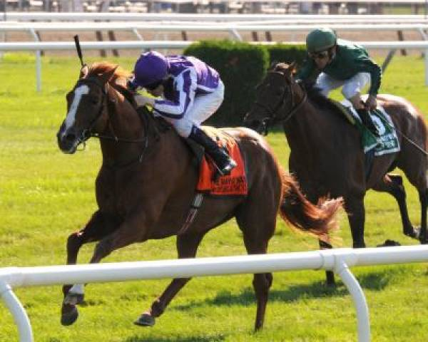 Odds to Win the Arlington Million 2011