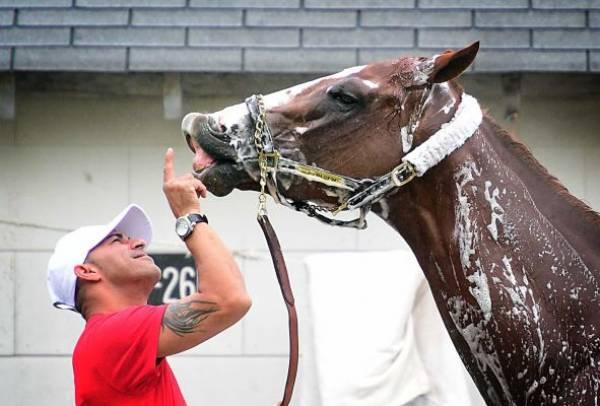Tỉ lệ cược để thắng giải đua ngựa 2014 Breeders Cup Classic