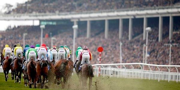 Cheltenham Trials Day 2019 - Getting Ready For the Festival Action
