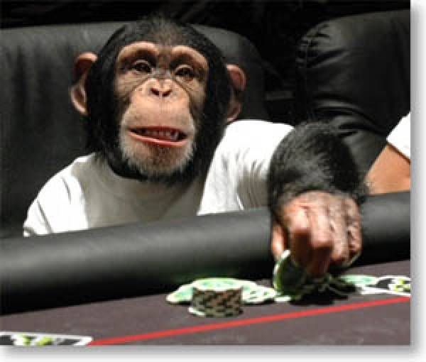 Chimp Playing Poker