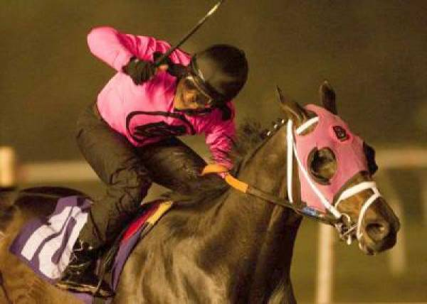 Comma to the Top Kentucky Derby Odds