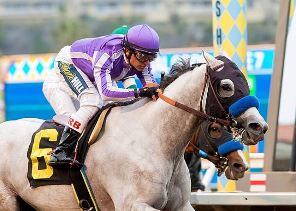 Cupid Odds to Win the 2017 Breeders Cup Classic