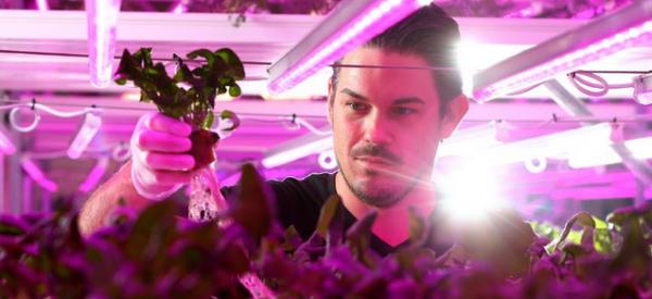 Fallen Internet Gambling Tycoon, Informant Now Growing Hydroponic Herbs