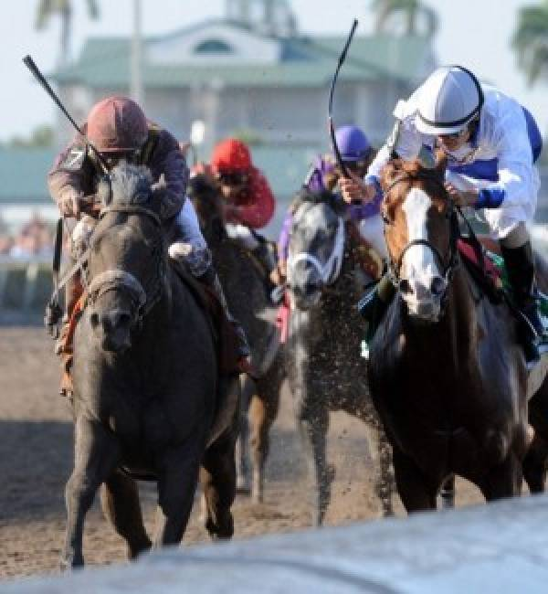 Horse Betting:  Latest odds