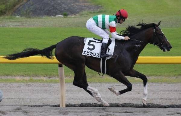 Epicharis Odds to Win the 2017 Belmont Stakes
