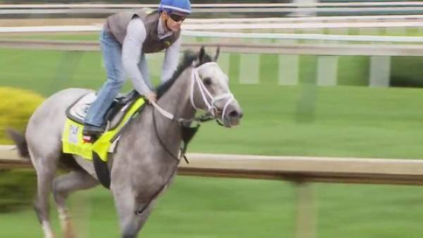 What Will the Payout Be if Fast and Accurate Wins 2017 Kentucky Derby