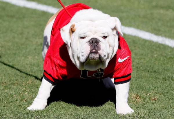 UGA vs. Missouri Point Spread at -13.5: Best Bets