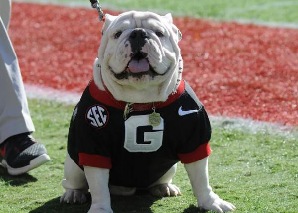 Bulldog betting odds usher on bet show