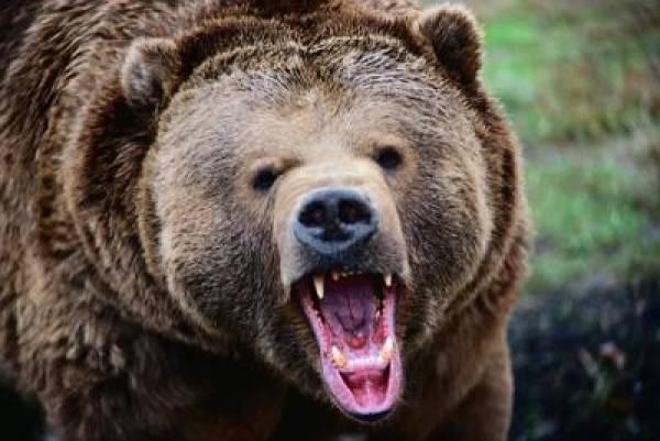 Grizzlies Gambling