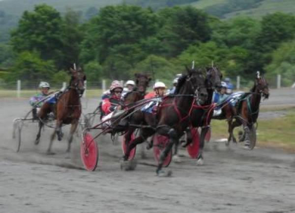 Harness Racing Betting
