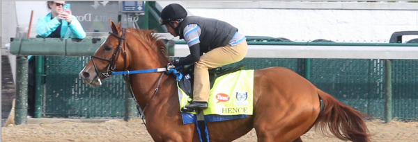 What Are the Current Odds of Hence Winning the Preakness Stakes