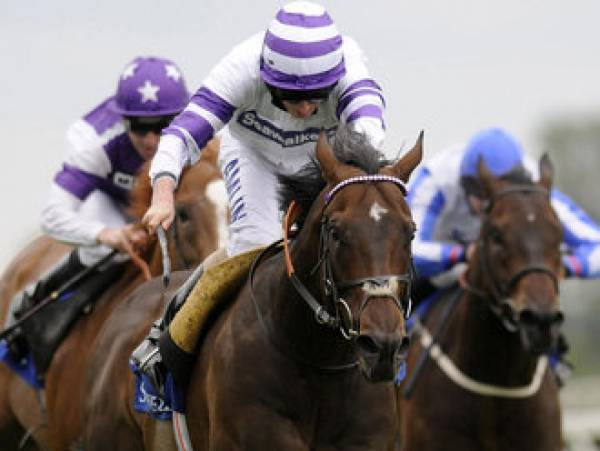 Blue Square Stewards' Cup Odds High Standing