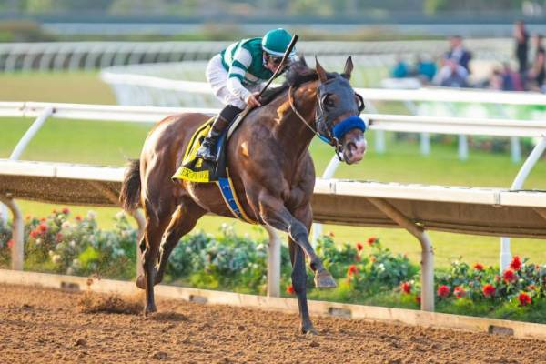 Higher Power Breeders Cup Payout Odds