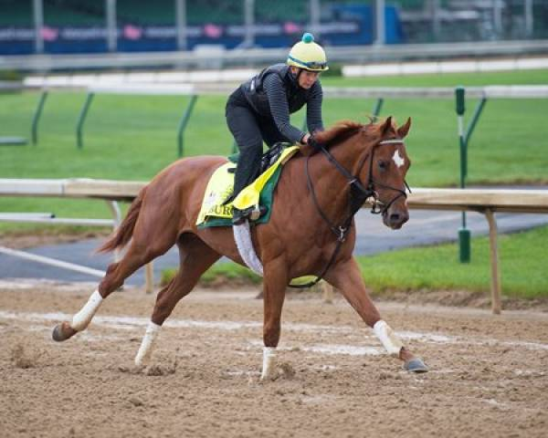 Hofburg Post Position Chances of Winning the Kentucky Derby
