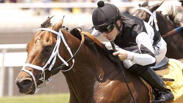 What Are The Different Types of Horse Betting Types?