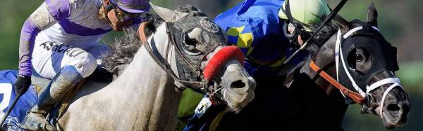 2017 Haskell Invitational Betting Odds