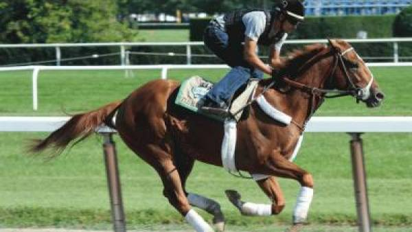Belmont Stakes 2012 Weather Forecast:  Horses That Run Best in Mud