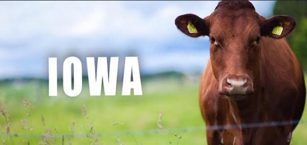 Iowa Casinos Launch Sports Betting