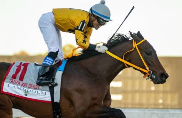 What Will the Payout Be on King Guillermo to Win the Kentucky Derby?