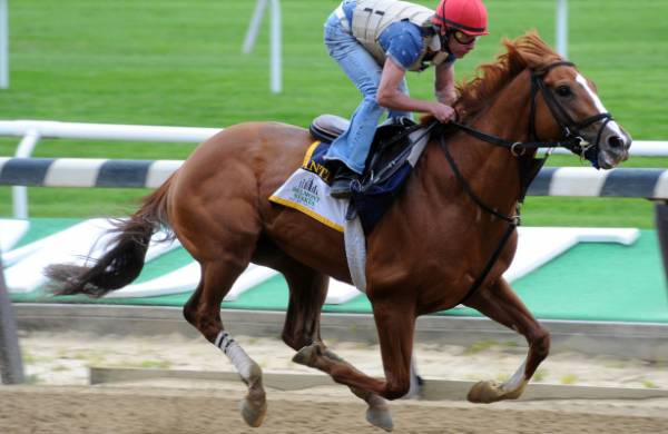 Meantime Odds to Win 2017 Belmont Stakes – Payout Potential