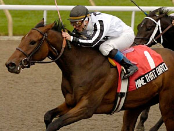 Odds to Win the Breeders Cup Classic 2009