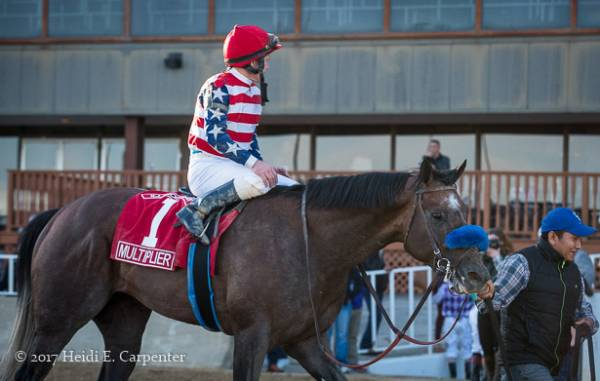 What Are the Current Odds of Multiplier Winning the 2017 Preakness Stakes?