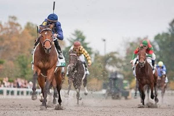 Noble's Promise Kentucky Derby Odds