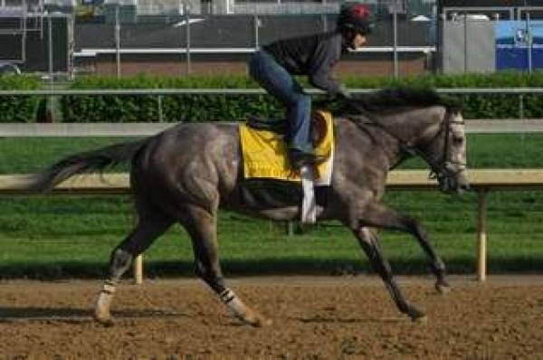 Preakness Stakes 2010 Contenders