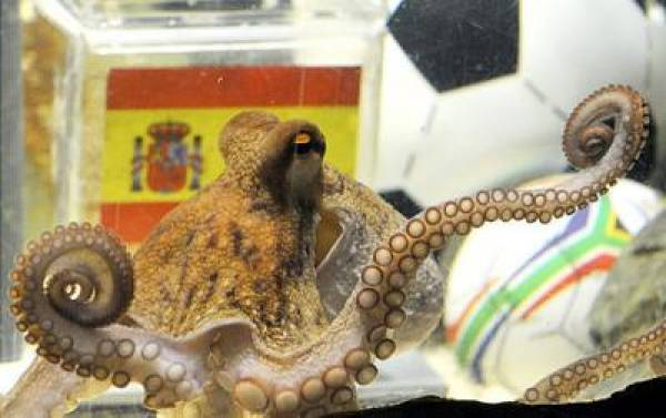Paul The Octopus Is Dead