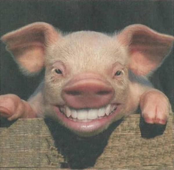 Earmarks Pork