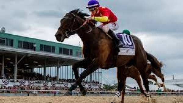 Quip Odds to Win the Preakness 2018