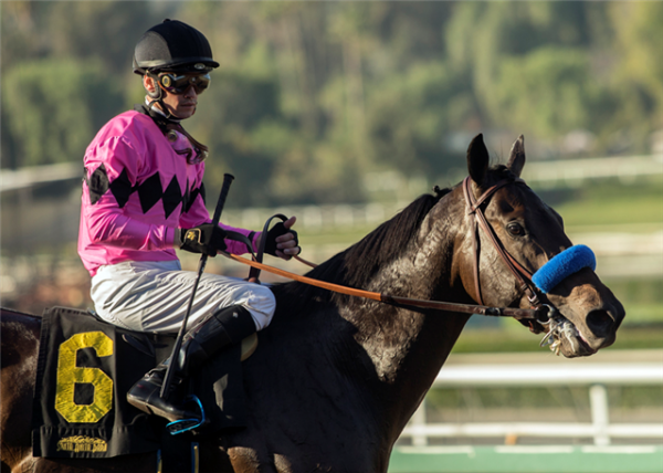 How much does it cost to bet on the belmont stakes best online sports betting bonus