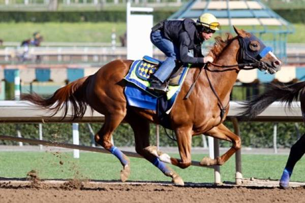 Odds on Solomini to Win This Year's Kentucky Derby