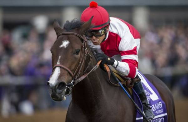Songbird Wins Ogden Phipps: What's Next for Her?