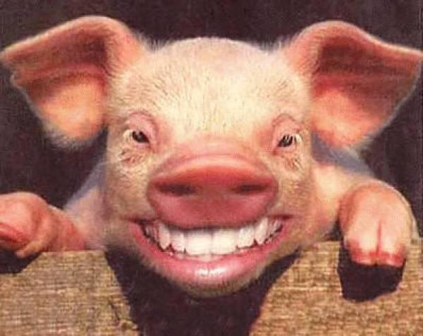 Spending Bill Pork