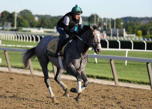 Tacitus Payout Odds to Win Belmont Stakes
