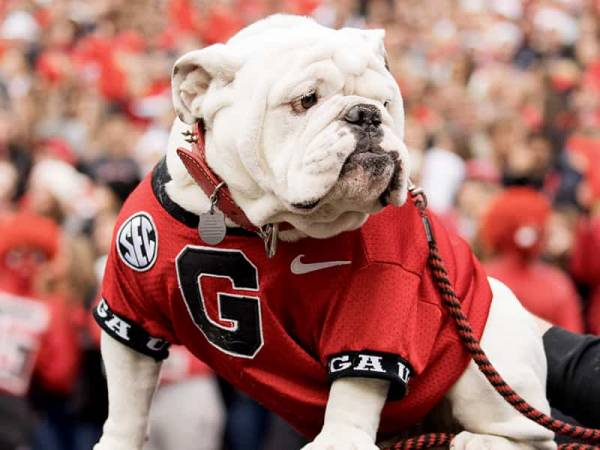 Missouri vs. UGA Betting Preview 2019