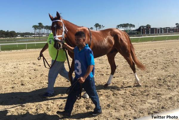 Vino Rosso Post Position Chances of Winning the Kentucky Derby