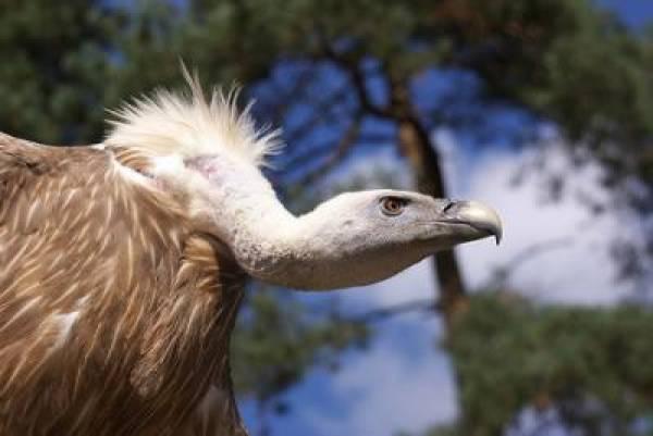WSOP Vulture Cam