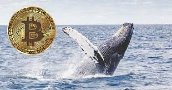 Bitcoin Whale Suggests BTC Price Will Crash,The Up, $8.8 Trillion in Crypto Traded Q1